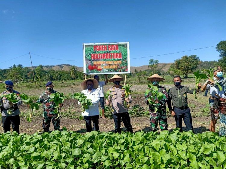 Launcing Kampung Hebat Happa Lambanapu Ditandai Dengan Panen Hasil Kebun